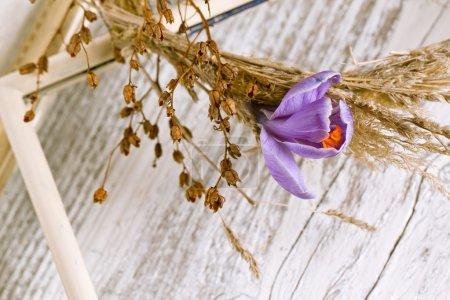 Purple crocus flower in dry wreath