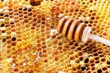 Photo pour Peignes au miel et trempette au miel en bois - image libre de droit