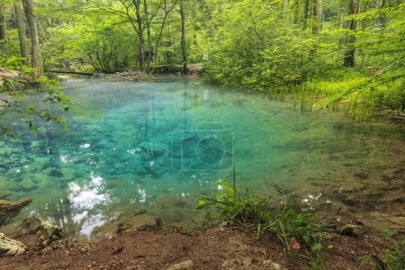 Clear water and beautiful water source in forest,O...