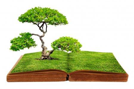 Foto de El crecimiento del árbol grande de un libro aislado sobre fondo blanco - Imagen libre de derechos