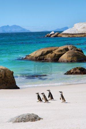 Four little penguins on beautiful