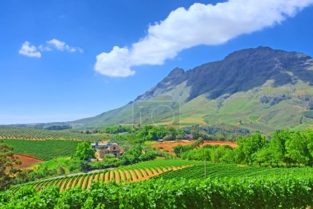 Vineyards against awesome mountains