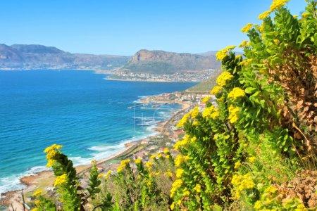 Yellow wild flowers, mountain, sea view