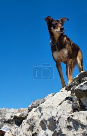 Hiker's dog on summit