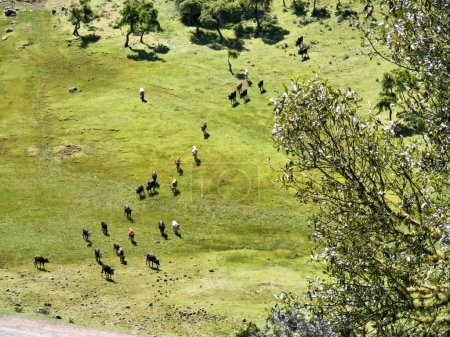 Aerial view at herd of cows in mountains