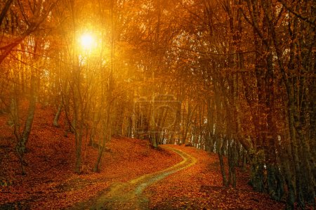 Photo for Sunrise in autumn forest - Royalty Free Image
