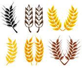 Wheat and rye ears