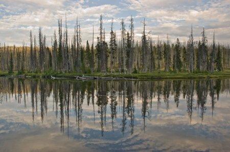 Lewis Lake Reflection