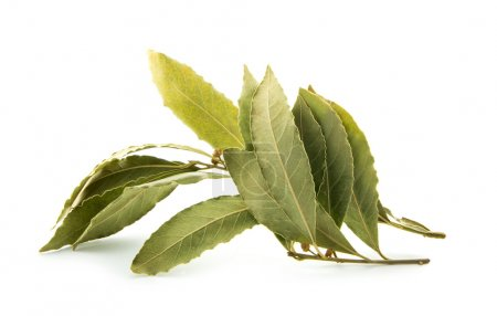 Photo for Branch of dried bay leaves isolated on white background - Royalty Free Image