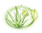 Aloe vera plant and extract