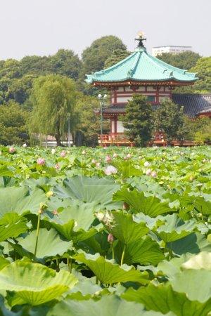 Green Japanese garden