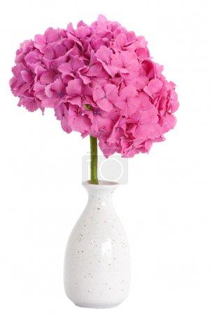 Photo pour Belle fleur d'hortensia dans le vase - image libre de droit