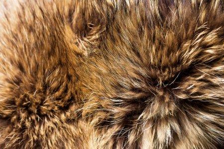 Photo pour Fond de fourrure de renard belle - image libre de droit