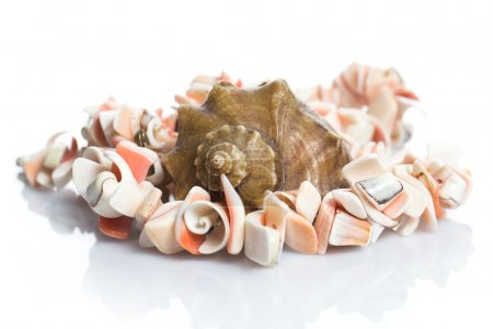 Seashell and necklace