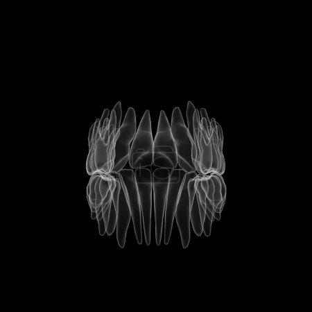 Photo pour 3d rendu des dents humaines - image libre de droit