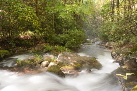 Photo for Mountain stream in Great Smoky Mountains national park - Royalty Free Image
