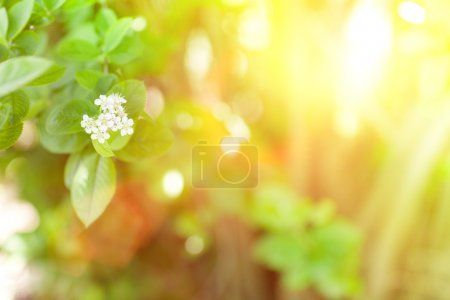 Photo for Sunlight and flowers in spring - Royalty Free Image