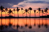 Paradise beach sunset tropical palm trees
