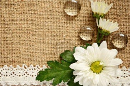 Daisy arrangement on beige canvas