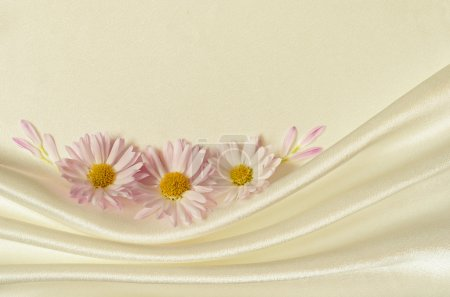 White background with chamomiles