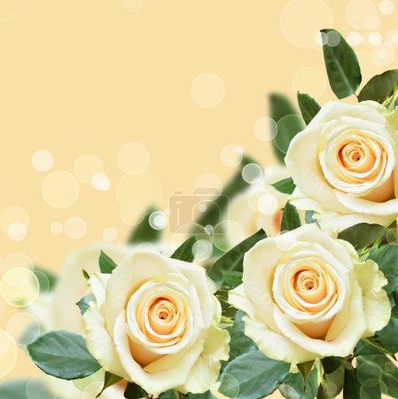 Photo pour Fond pêche aux roses blanches - image libre de droit