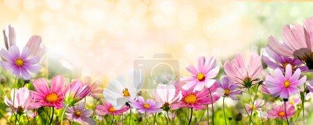 Foto de Flores - Imagen libre de derechos