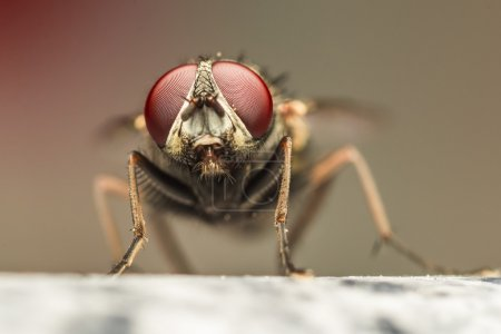 Extreme Detailed Photo Of A Fly's Red Eyes...