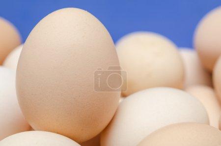 Chicken Egg Close Up