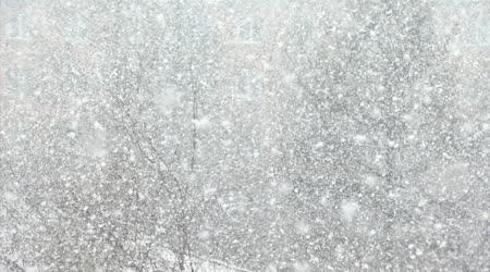 Snow, large flakes of snow create a winter background