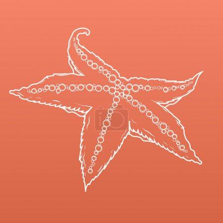 Illustration for Detailed white outlines of starfish isolated on orange background. Seastar. Vector illustration. - Royalty Free Image