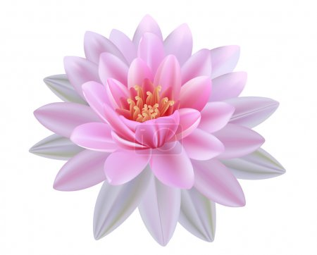 Lotus flowers on a white background. Realistic wat...