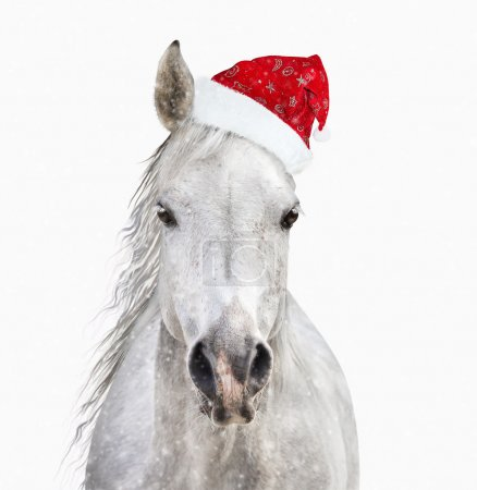 Horse with santa hat on white background isolated...