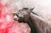 Koně smát na srdce svátek pozadí valentine