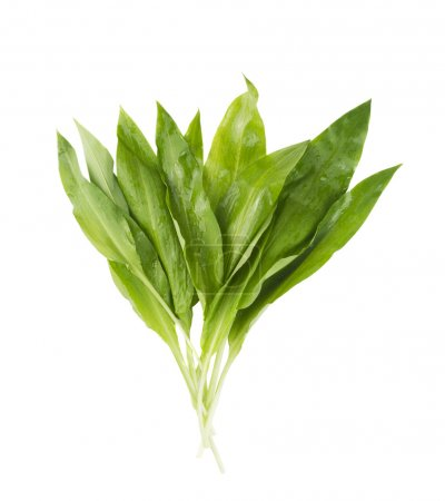Photo for Bunch of wild ramson, isolated - Royalty Free Image