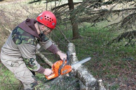 Photo pour Un bûcheron travaillant avec une scie à chaîne, (betula) - image libre de droit