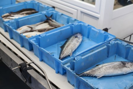 Organizing fish for the auction