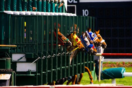 Photo for Thoroughbred race horses breaking from the starting gate. - Royalty Free Image