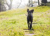 chien avec le bâton dans le parc
