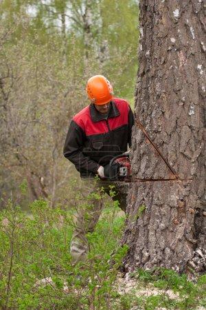 Photo pour Un bûcheron au travail dans la forêt - image libre de droit