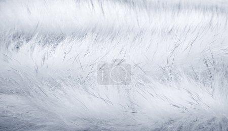 Photo pour Fond de fourrure de renard blanc de l'Arctique - image libre de droit