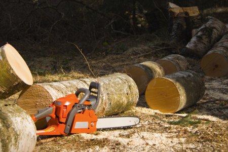 Photo pour La motosega è abbattuta da albero - image libre de droit