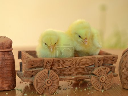 little yellow chicks sitting in a clay wagon