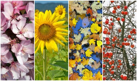 Photo pour Quatre saisons. nature en printemps, été, automne et hiver. - image libre de droit
