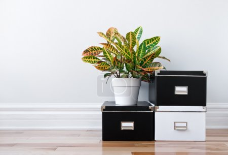 Photo for Black and white storage boxes and green plant in a room. - Royalty Free Image