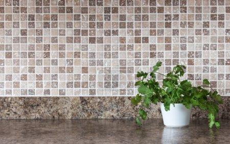 Photo pour Pot blanc avec des herbes vertes sur le comptoir de cuisine. - image libre de droit