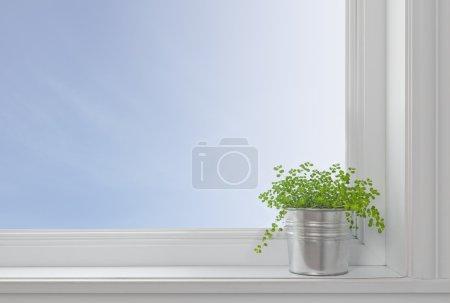 Photo pour Plante verte sur le rebord d'une fenêtre, dans une maison moderne, avec un ciel bleu à travers la fenêtre. - image libre de droit
