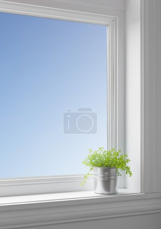 Blue sky and green plant on a windowsill