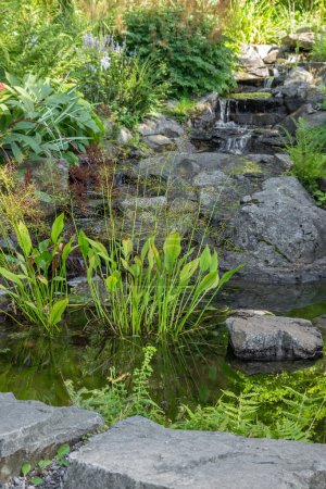 Garden decorated with stones and aquatic plants