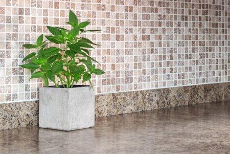 Photo pour Pot avec menthe verte sur le comptoir de cuisine. - image libre de droit
