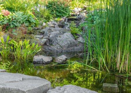 Garden with aquatic plants, pond and decorative stones